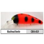 CBB-b-B19 blackhead beetle